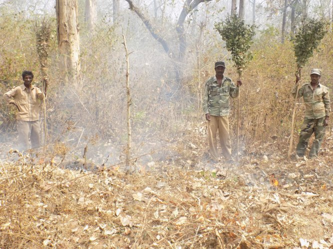 Fire set by miscreants depleting forest cover