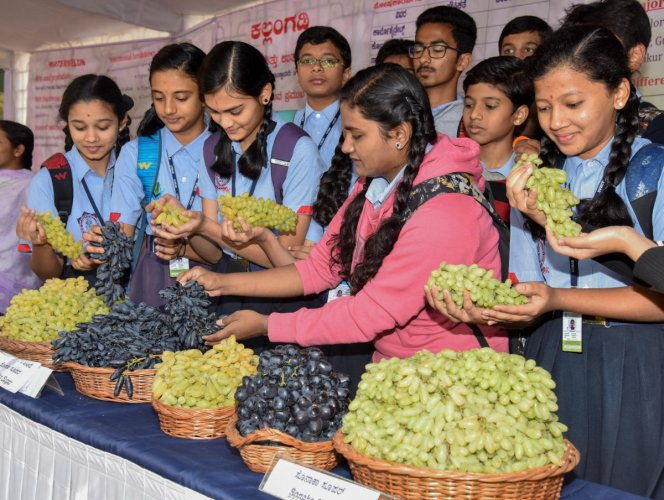 5-day grape, watermelon fair inaugurated