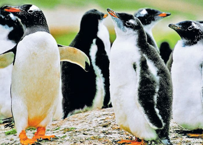 1.5 million penguins discovered on remote Antarctic islands: study
