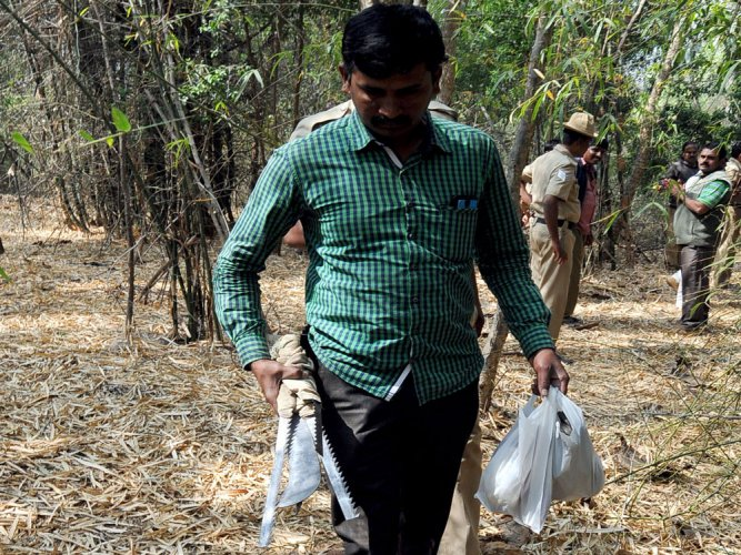 55 sandalwood trees stolen from Jnanabharathi campus in 3 years