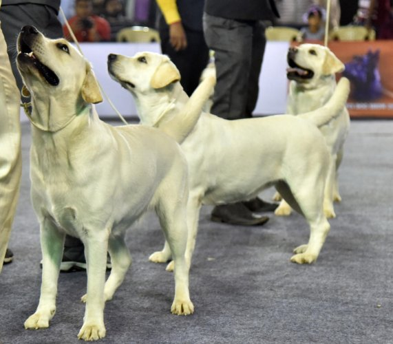Guess what Bengaluru? Soon you can rent a dog to beat the blues