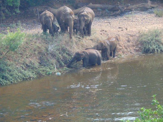 Herd of elephants leaves behind ill calf