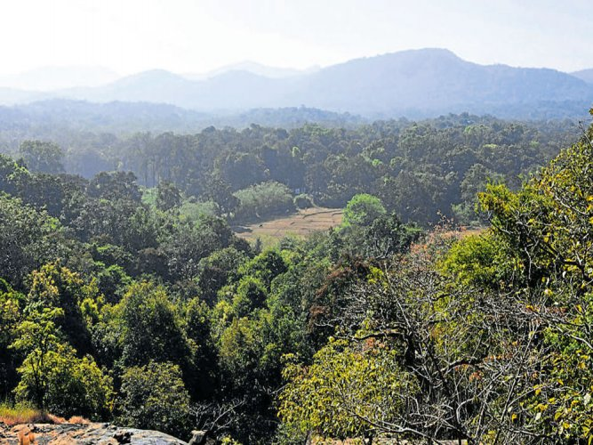 Out of the total forest in India, very dense forest (with canopy density of 70% and more) constitutes 2.99% of the area while each of category of moderately dense forests (40-70% canopy density) and open forest (10-40% canopy) is above 9% of the area, according to the latest India's State of the Forest Report (ISFR), 2017. Representational Image