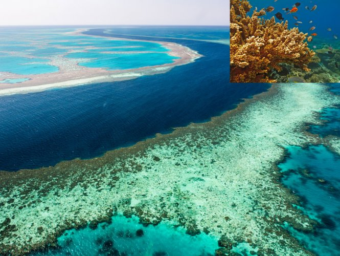The Great Barrier Reef. File photo.