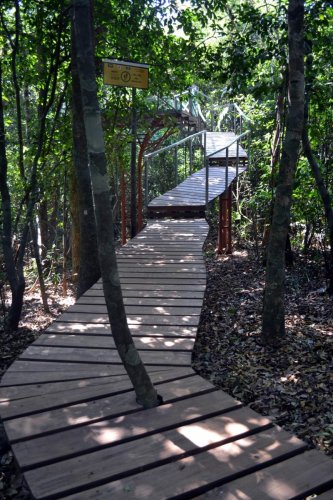 A view of the canopy walkway at Kuveshi in Joida taluk. Photo by author