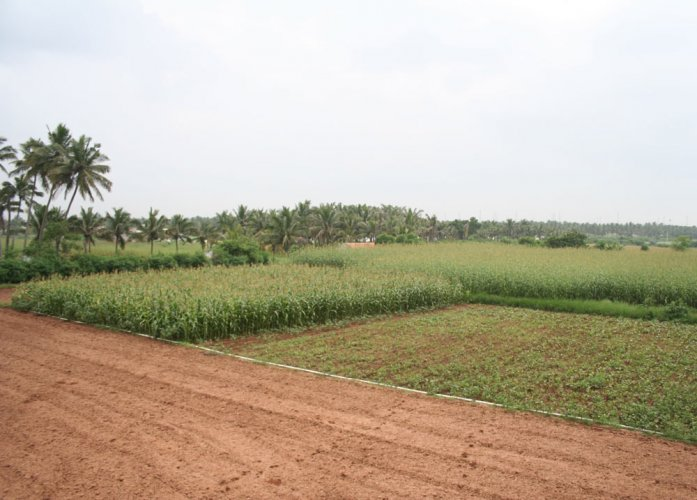 Muni Venkatappa, a revenue department shirastedar at the Deputy Commissioner's office in Kolar, owns 38 acres of farmland. Representation photo