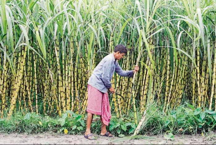 The decision of the Cabinet Committee on Economic Affairs is expected to help sugar mills clear up the arrears they owe the cane growers.