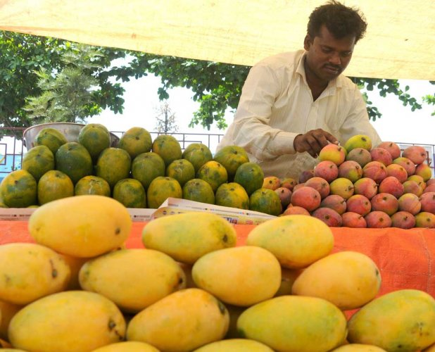 Come summer and the mango feast begins. In the sweltering heat, there is one redeeming feature - the mango. There is no fruit more luscious and mouthwatering. Even the most finicky eaters love it. DH file photo