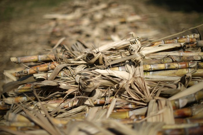 Opposition smells conspiracy in sugar mills probe by CBI