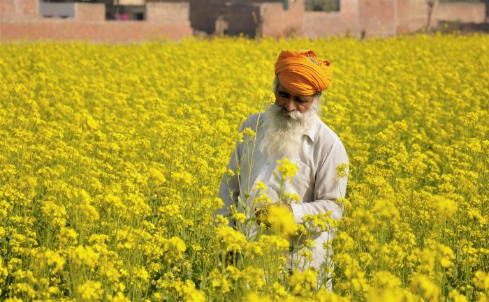 The Punjab government has identified another 3.26 lakh marginal farmers who will be provided debt relief this month. PTI file photo