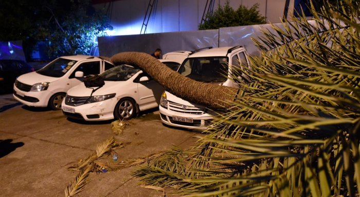 A palm tree trunk fell on cars during dust storm in New Delhi, on Sunday. PTI Photo