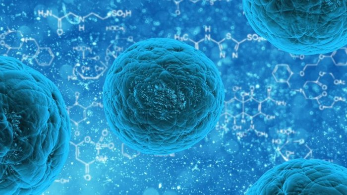In recent years, researchers have been increasingly successful in growing stem cells into more complex, 3D structures called mini-organs or organoids. (Image for representation)