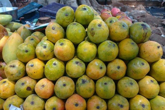 The KSMDMC plans to host mango-picking tours.