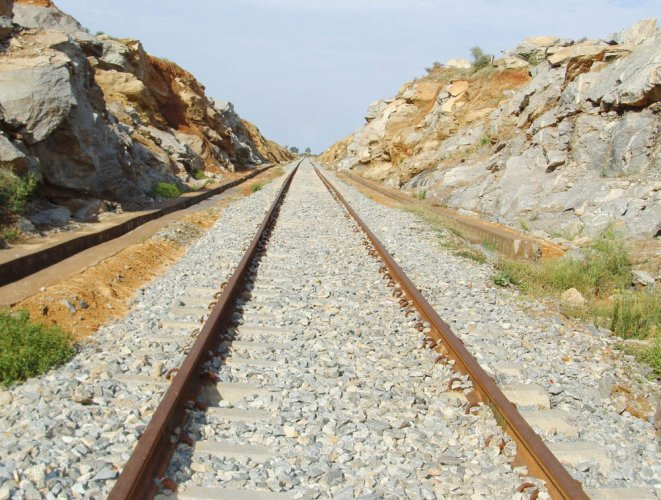 Cows that were resting between railway sleepers and tracks were knocked by train and nine among them were killed on the spot. Representational Image