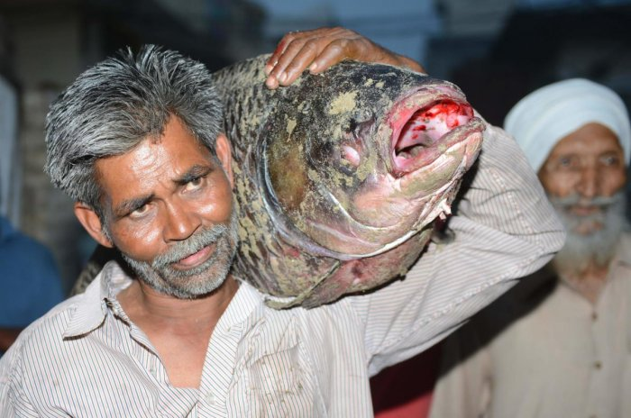 In this photograph taken on May 17, 2018, a resident carries a dead fish taken out from the Beas river, in Beas village, some 45kms from Amritsar. Hundreds of fish were found dead in the Beas river in Amritsar district, officials said on on May 17. / AFP