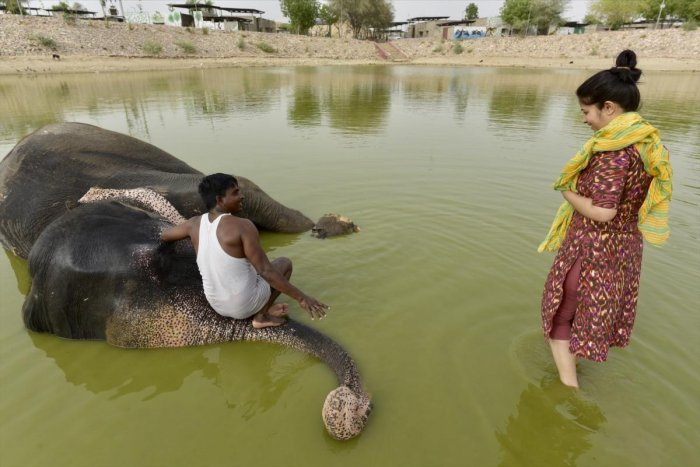 A woman watches as a mahout gives bath to an elephant in Haathi Gaon on the outskirts of Jaipur. Photo Courtesy: Anchit Natha
