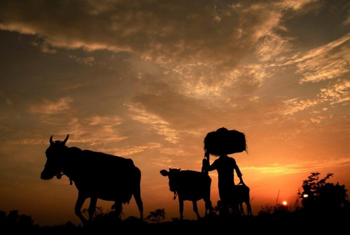 The Punjab government today said that it has so far approved financial assistance of Rs 8.88 crore in 314 cases of farmer suicide. PTI file photo