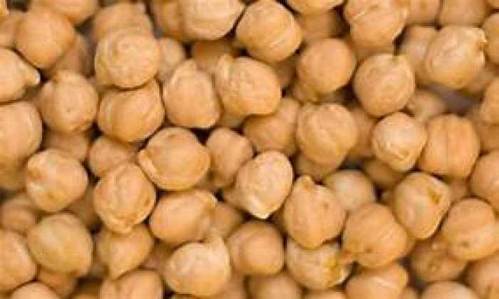 Chickpea and pigeonpea have 15-22 grams of protein per 100 grams and are a critical food and nutrition source. DH Photo.