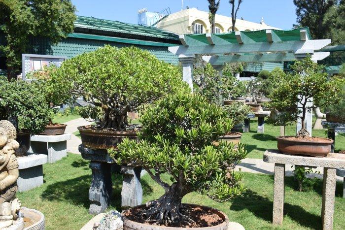 Some of the bonsais on display at the Kishkindha Moolika Bonsai Garden in Mysuru. PHOTO BY AUTHOR