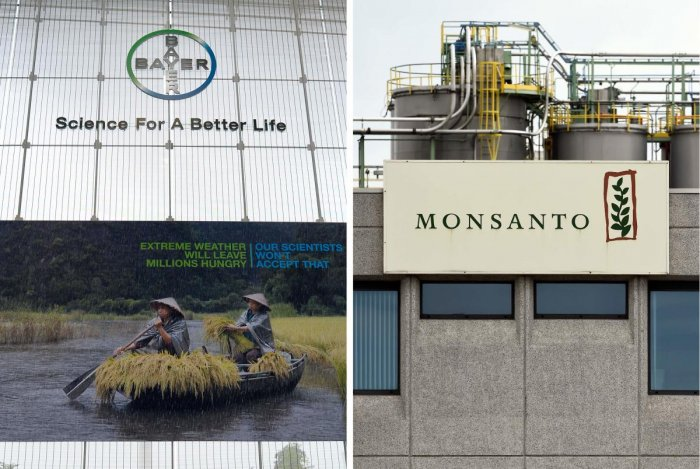 (FILES) This file combination of pictures created on July 14, 2016 shows the logo of German pharmaceutical giant Bayer (L) taken on May 23, 2016 in Leverkusen and the Monsanto logo taken on May 24, 2016 in Lille near Antwerp. German chemicals and pharmace