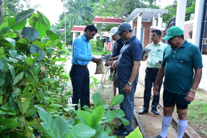 Saplings were distributed to people on the occasion of World Environment Day, observed by Prajavani - Deccan Herald at Kadri Park in Mangaluru on Tuesday. DH PHOTO