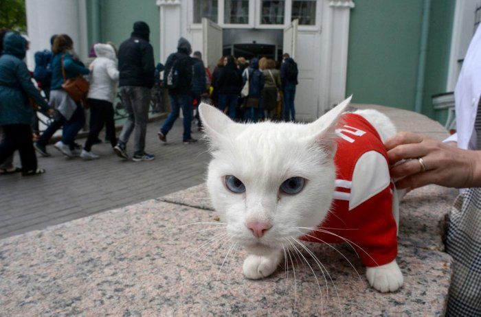 Achilles the cat will soon begin his work as Russia's official soothsayer for the World Cup. AFP