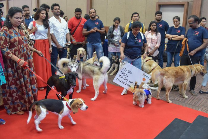 Dog lovers along with their pets at an event organised to create awareness about adopting pets, on Saturday. DH PHOTO/S K DINESH