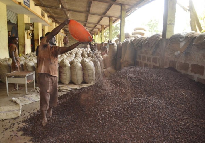 A mandi worker pours arecanut in a warehouse in Shivamogga. DH file photo