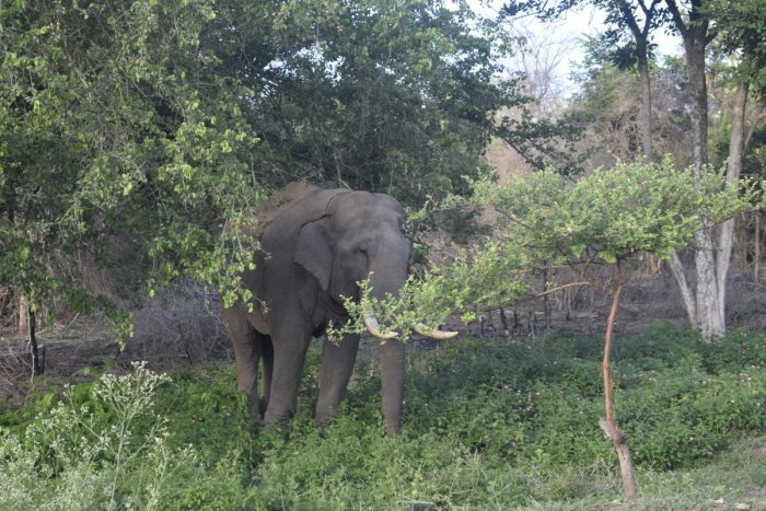 On hearing their trumpeting, residents of the village in Kadambur forest area this morning noticed the elephants in the well with about five feet of water and informed forest personnel. DH file photo for representation.