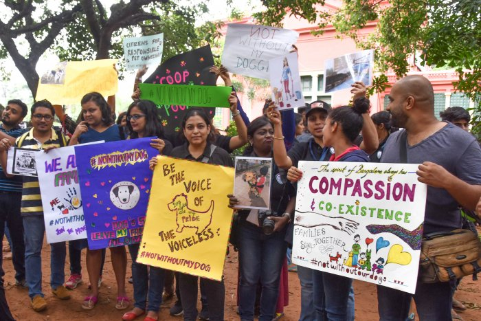 The #notwithoutmydog solidarity event at Cubbon Park happened on a Sunday.