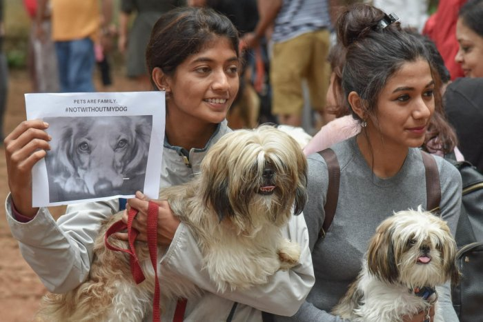 Citizens had run a campaign entitled #NotWithoutMyDog to oppose the BBMP bylaws. DH FILE PHOTO