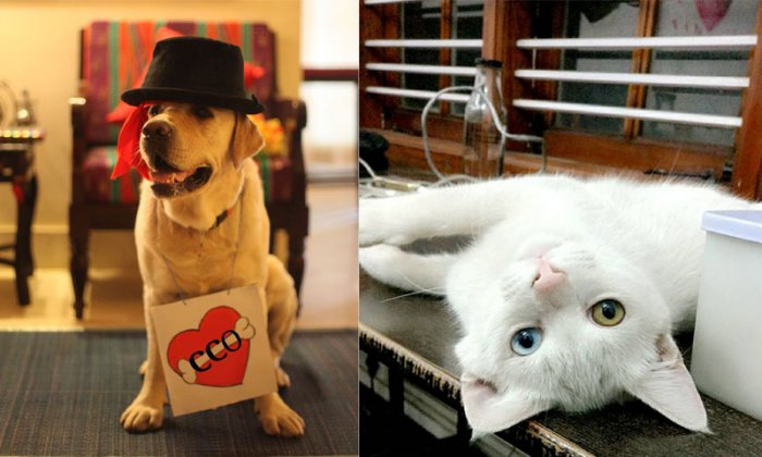 (Left) Bono, the Chief Cuddling Officer, at Curley Street Media; (right) Adam from Graffiti Collaborative