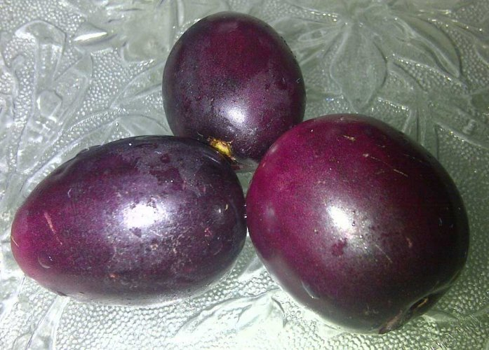 Two minor boys were thrashed for plucking Jamuns (black plums) from a tree in an Ambala orchard on Saturday. Photo via Wikicommons.