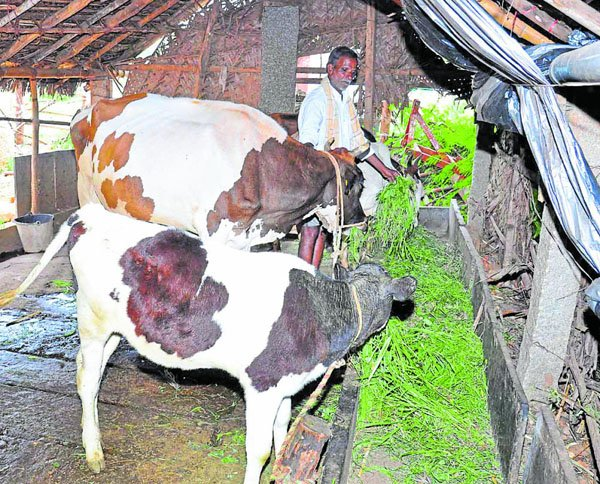 Innovative farmer Sahukar Siddappa, Chitradurga district