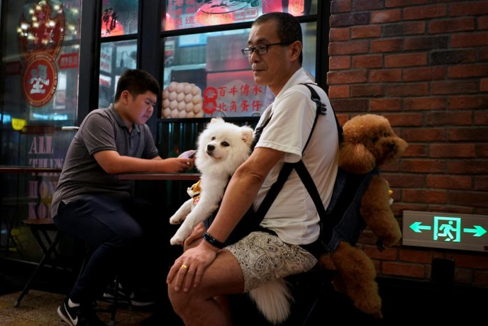A man carries his two dogs at a street market in Shanghai, China. (Reuters Photo)