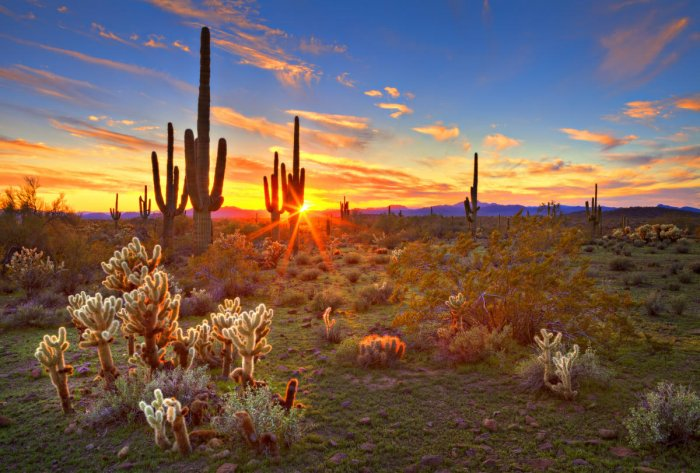 The Sonoran Desert, near Phoenix.
