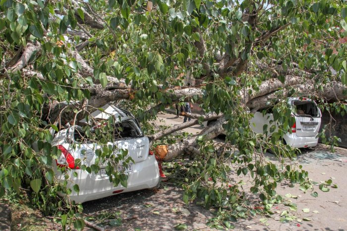 A tree falls on vehicles after heavy rains and storm, in Jammu on Saturday. PTI Photo