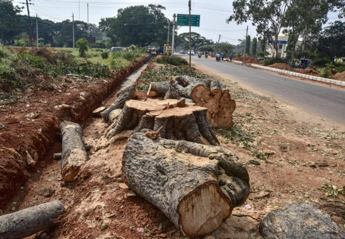 The counsel for Karnataka said the state has already sent the statement to the Environment Ministry and the tribunal should not impose a fine on it. DH file photo
