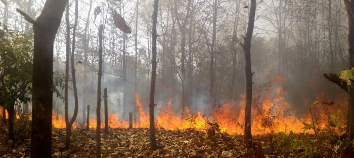 From 589 cases of forest fire in the state in 2015, it went up to 913 in 2016 and then to 925 in 2017. DH File photo