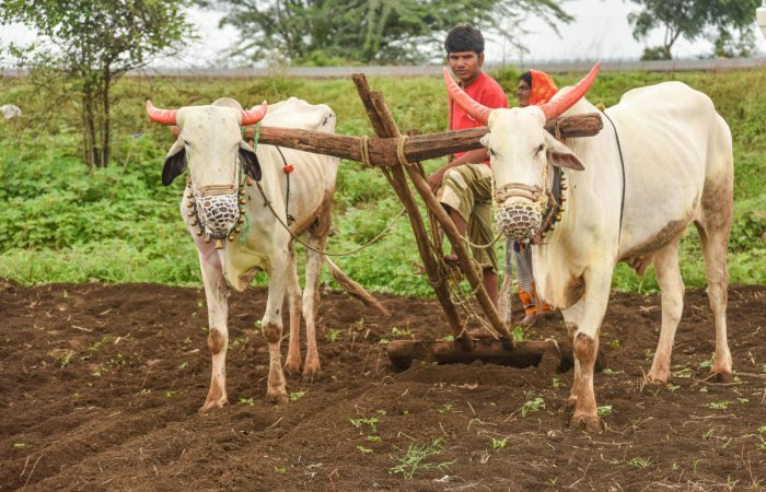 Farmers should take up agro-allied activities like poultry, dairy and bee-keeping to increase their income, Union minister Gajendra Singh has said. (DH File Photo)