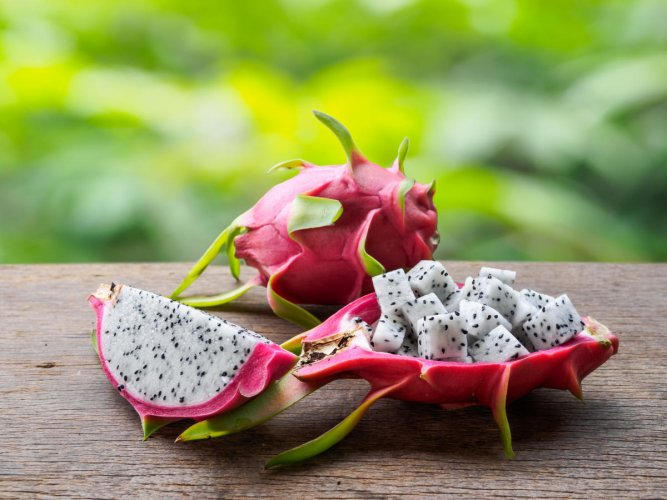 White-fleshed and red-fleshed dragon fruits (top) are cultivated in Karnataka.