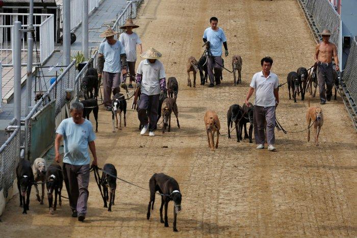 Greyhounds, Reuters file photo