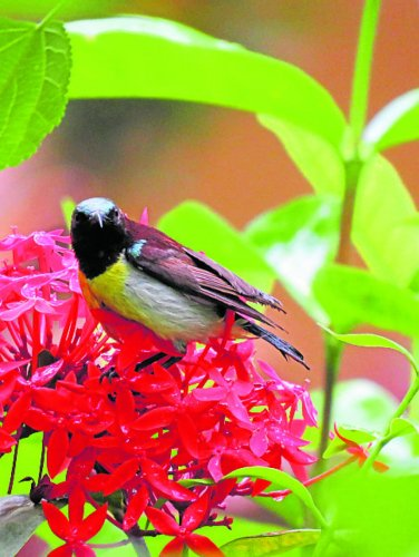 Rare migratory birds have made an appearance in Subha Bhat's garden.