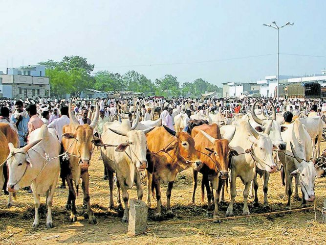 Prani Kalyana Sangha members stopped a lorry on its way from Anantapur to Bengaluru, transporting 30 cattleheads at Hitamakalahali in Chikkaballapur taluk. Police have booked the driver and the cleaner.File photo