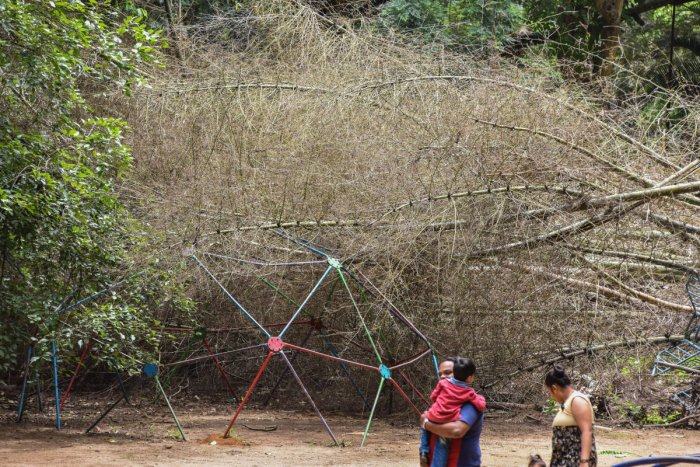 Dry bamboo that fell on the children's play equipment at Bal Bhavan in Cubbon Park on Sunday. DH Photo/S K Dinesh