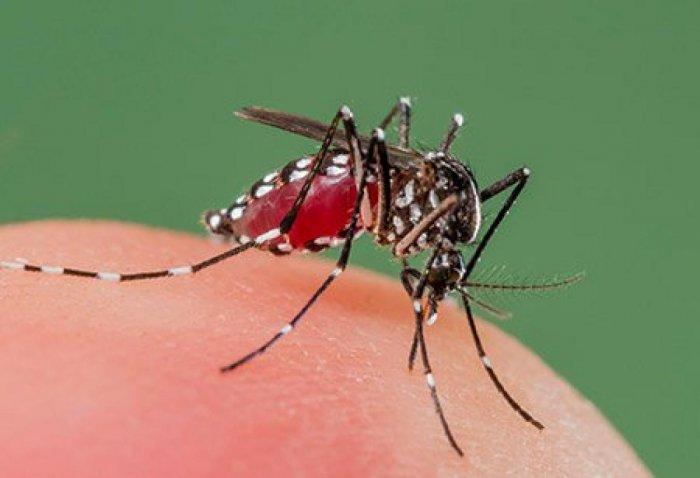 A two-year clinical trial in West Africa involving 2,000 children showed that the number of cases of clinical malaria was reduced by 12 per cent. (Representative image)