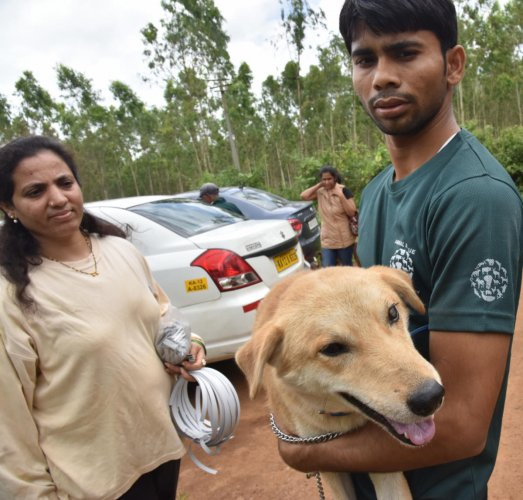 Volunteers from Bengaluru, Mysuru and Kodaikkanal have come together to care for animals affected by floods in Madikeri, at Bylukuppe, Mysuru district. dh photo