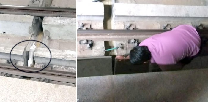 Namma metro staff struggling to rescue a cat running around the tracks at Jalahalli metro station. Trains were deferred by five minitues at both the sides, rescue operation is being carried out during the waiting period.