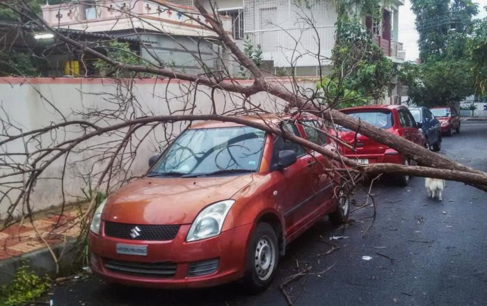 During a sudden downpour on Sunday, a tree was uprooted, leaving a car damaged at Kanteerava Nagar.