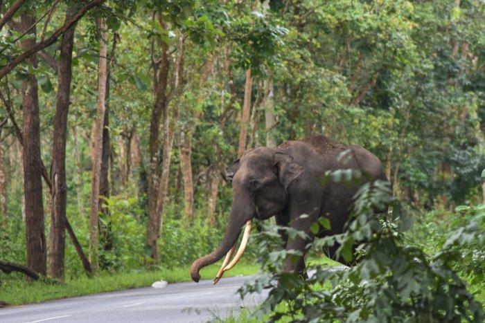 Elephants have been increasingly straying into human habitation in Karnataka. DH FILE PHOTO
